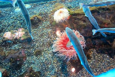 西雅图水族馆旅游景点攻略图