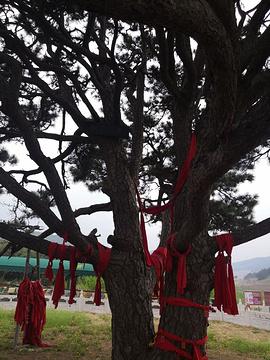 红带沟大清神树旅游景点攻略图