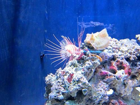 西雅图水族馆旅游景点图片
