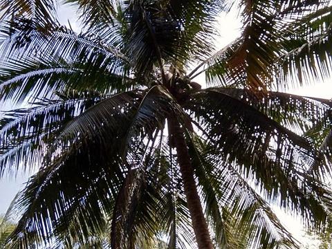 椰子大观园旅游景点图片