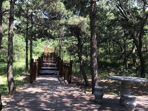 盘锦森林公园旅游景点图片
