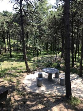 盘锦森林公园旅游景点攻略图