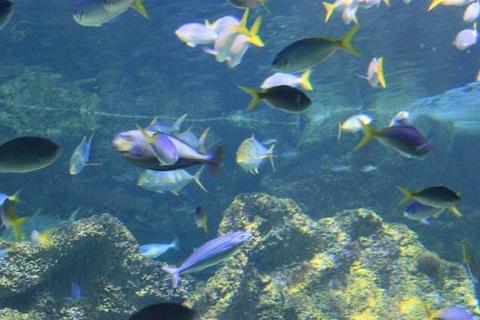 悉尼水族馆旅游景点攻略图